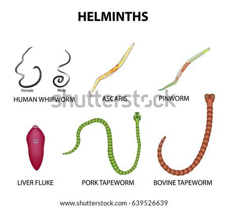 helminthiasis és enterobiasis hogy néz ki egy bika szalagféreg