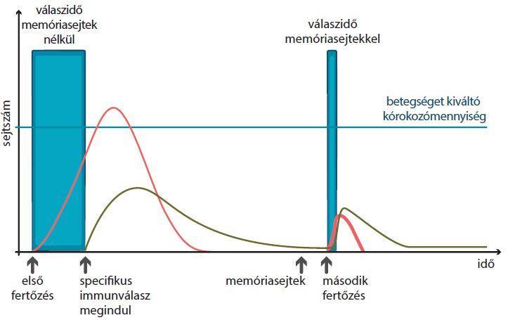 horoghernyó fertőzés útja)