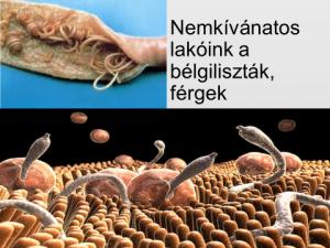 Gyógyszerek a parazita férgek számára