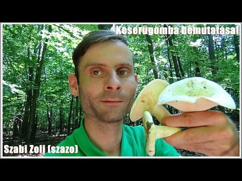 kordicepsz gomba parazita videó)