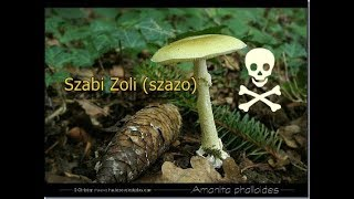 a parazita gombák testének megtisztítása