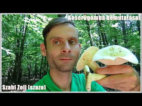 kordicepsz gomba parazita videó Loeffler szindróma aszcariasissal