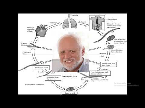 strongyloidosis és strongylitis