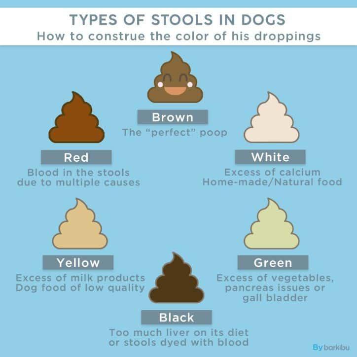 giardiasis poop color