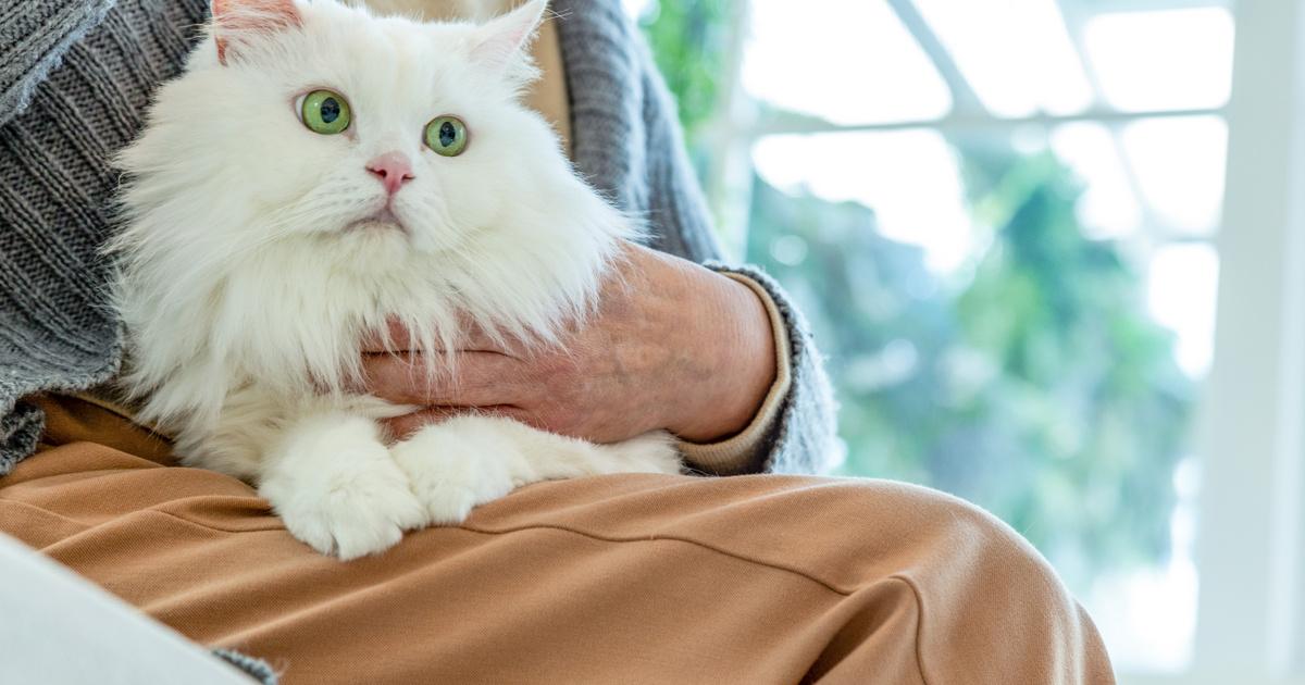 macska pirula után a férgek)