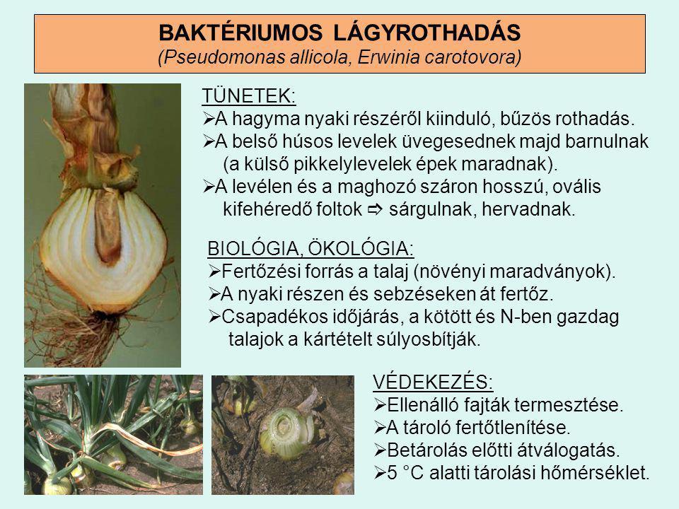 a hagyma légylárvák elleni védekezés helmintákkal