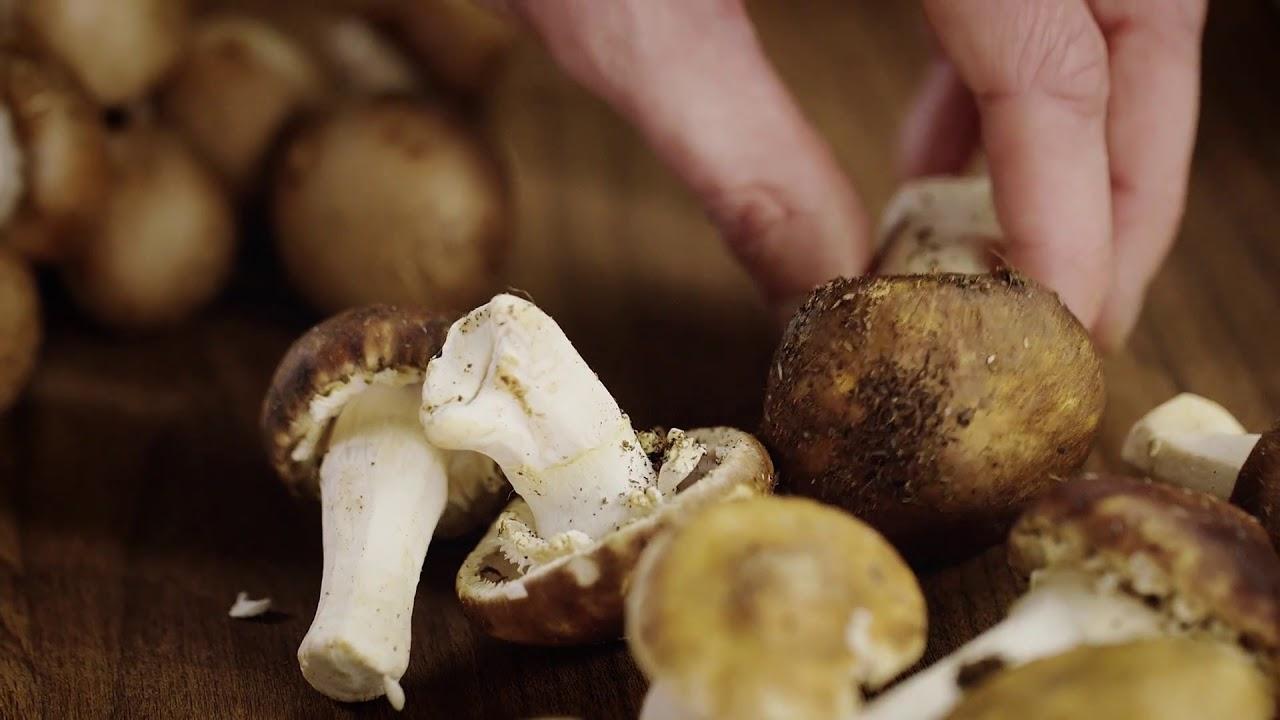 Gyógynövény a rókagombák ellen a paraziták számára. Gomba: az előnyök és a kár - Tea