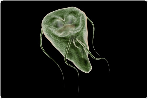 giardia infection in pregnancy