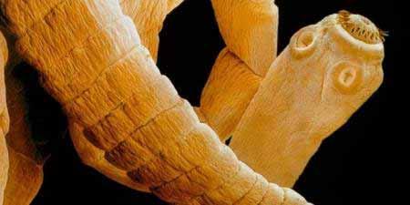 biztonságos gyógyszer az emberi test parazitáira tabletták emberi parazitákból