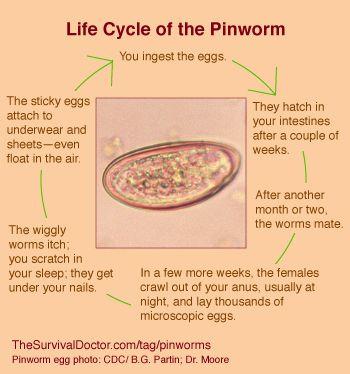 a pinworms életciklusa ifa a körféregen