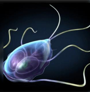 paraziták, amelyek időszakos hasmenést okoznak