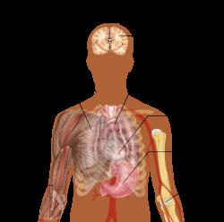 emberi parazitá fertozes tünetei