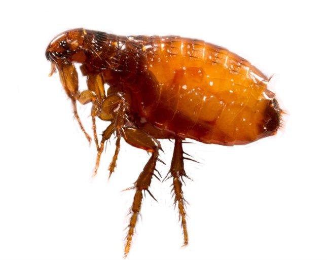 paraziták, ki ez)