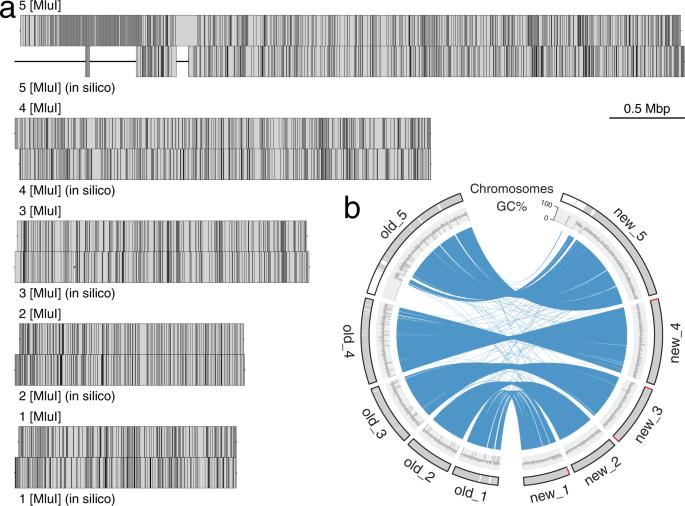 giardia genome size)