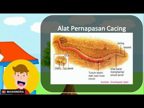 férgek kaviárban Melyik idő elteltével meghalnak a pinworms