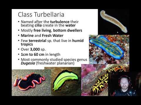 platyhelminthes turbellaria élőhely)