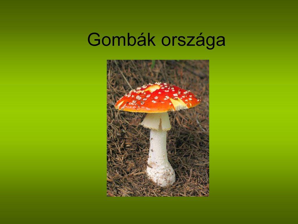 baktériumvírusok gombák és paraziták ppt)