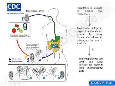 giardiasis klinikai iránymutatások