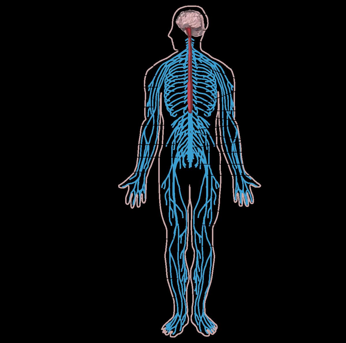 az emberi test parazitáinak megelőzése és kezelése)