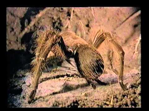 paraziták ragadozók)