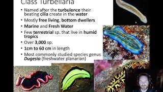 Platyhelminthes turbellaria élőhely