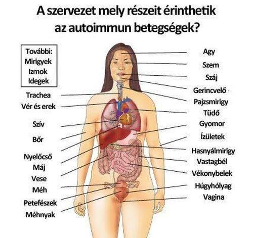 test szervezet)