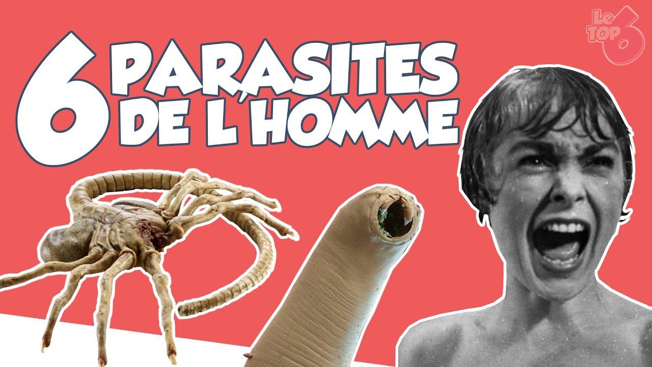 Ver Parasite, , , Les parasites chez l homme