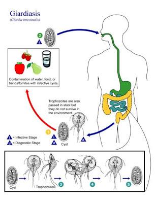 szivfereg gyakori kerdesek hatékony parazitá jógorvoslatok