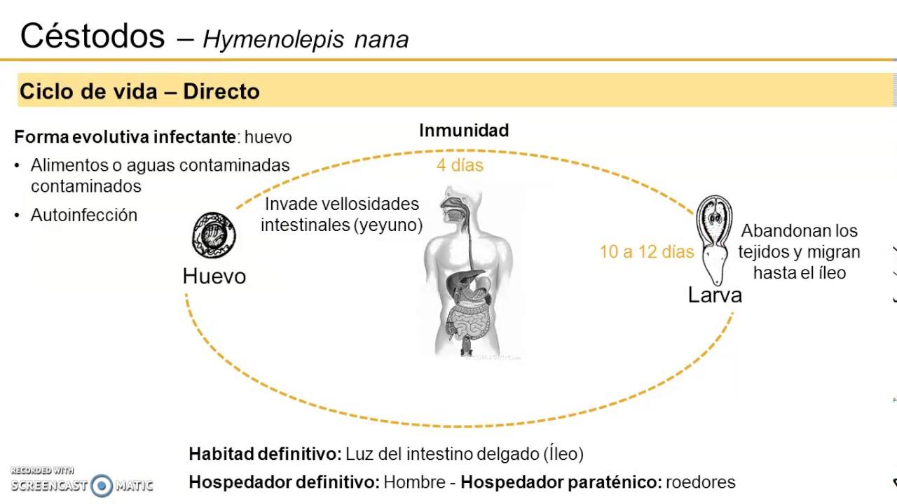 hymenolepidosis felnőttek tünetei és kezelése)