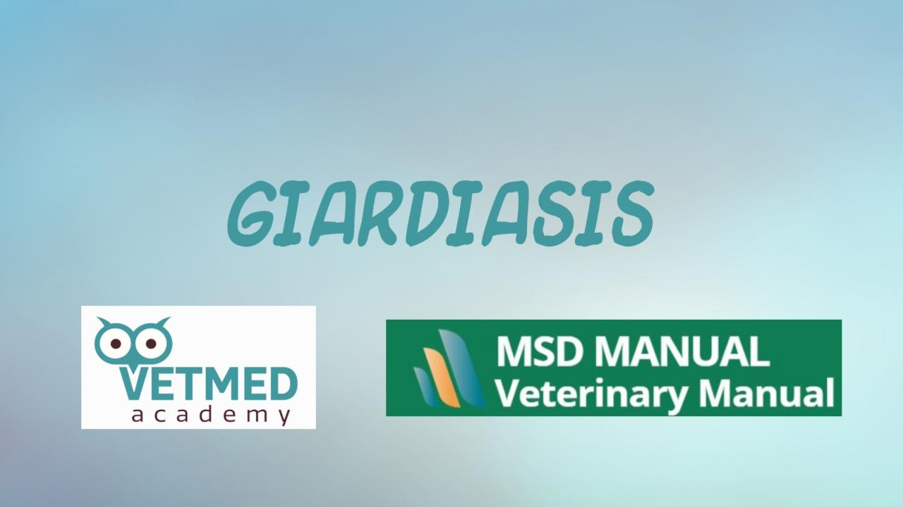 Giardiasis, Giardia merck veterinary manual