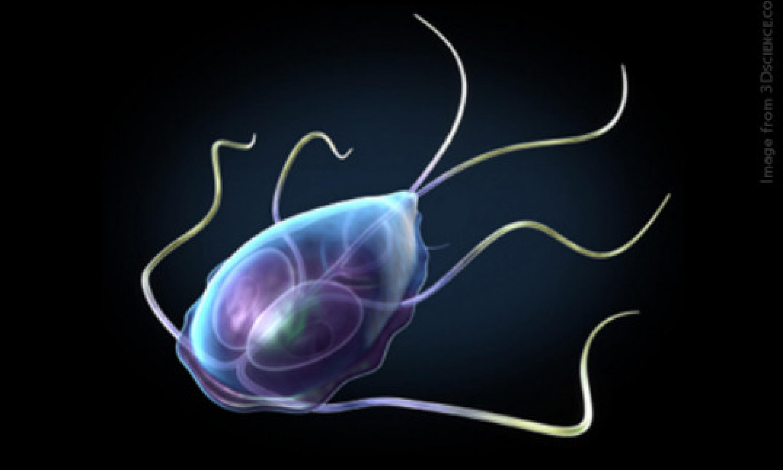 Giardia in humans diagnosis