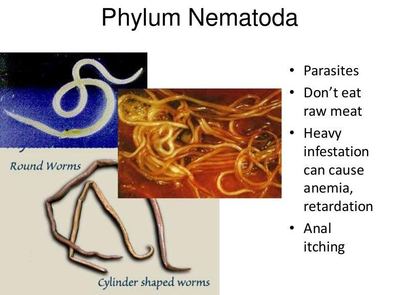 phylum nemathelminthes ppt)