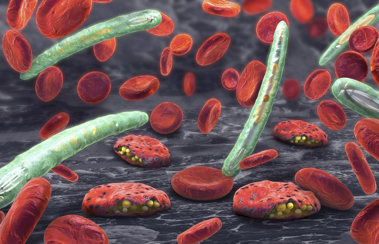 malária plazmodium)