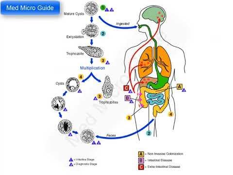 giardiasis kezelése