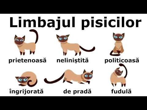 giardia pisici