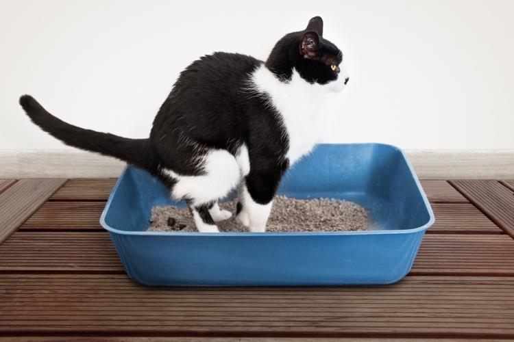 macska férgesség tünetei