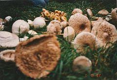 gombák fontossága a természetben élő parazitákban