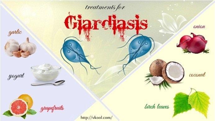 Giardia medicine for humans. giardiasis ბავშვს როგორ უნდა მკურნალობა