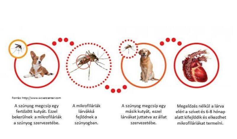 szivféreg teszt ara
