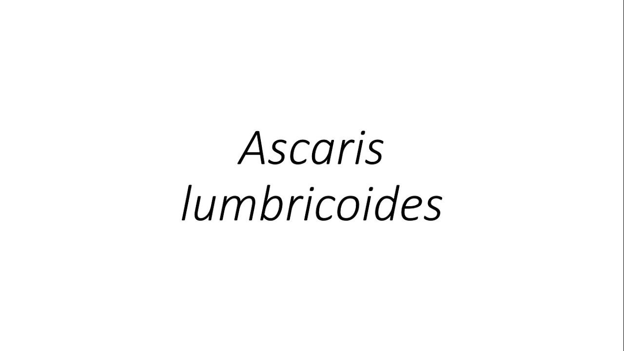 ascaris szöveg