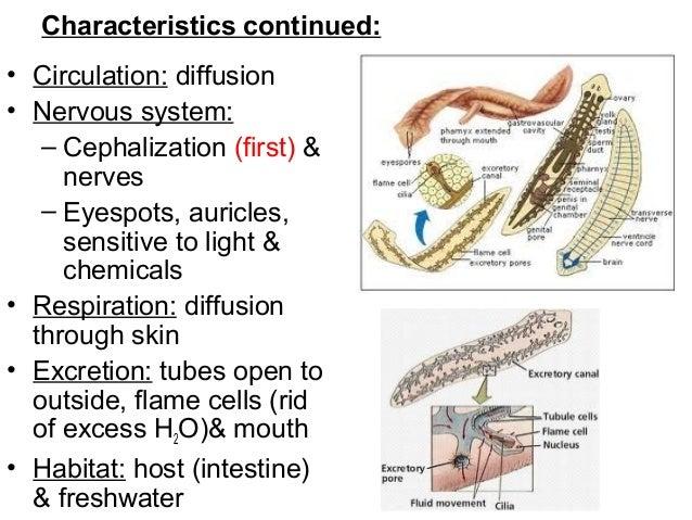 Képek a parazitákról, helmintákról, Milyen helminták terjednek a talajban