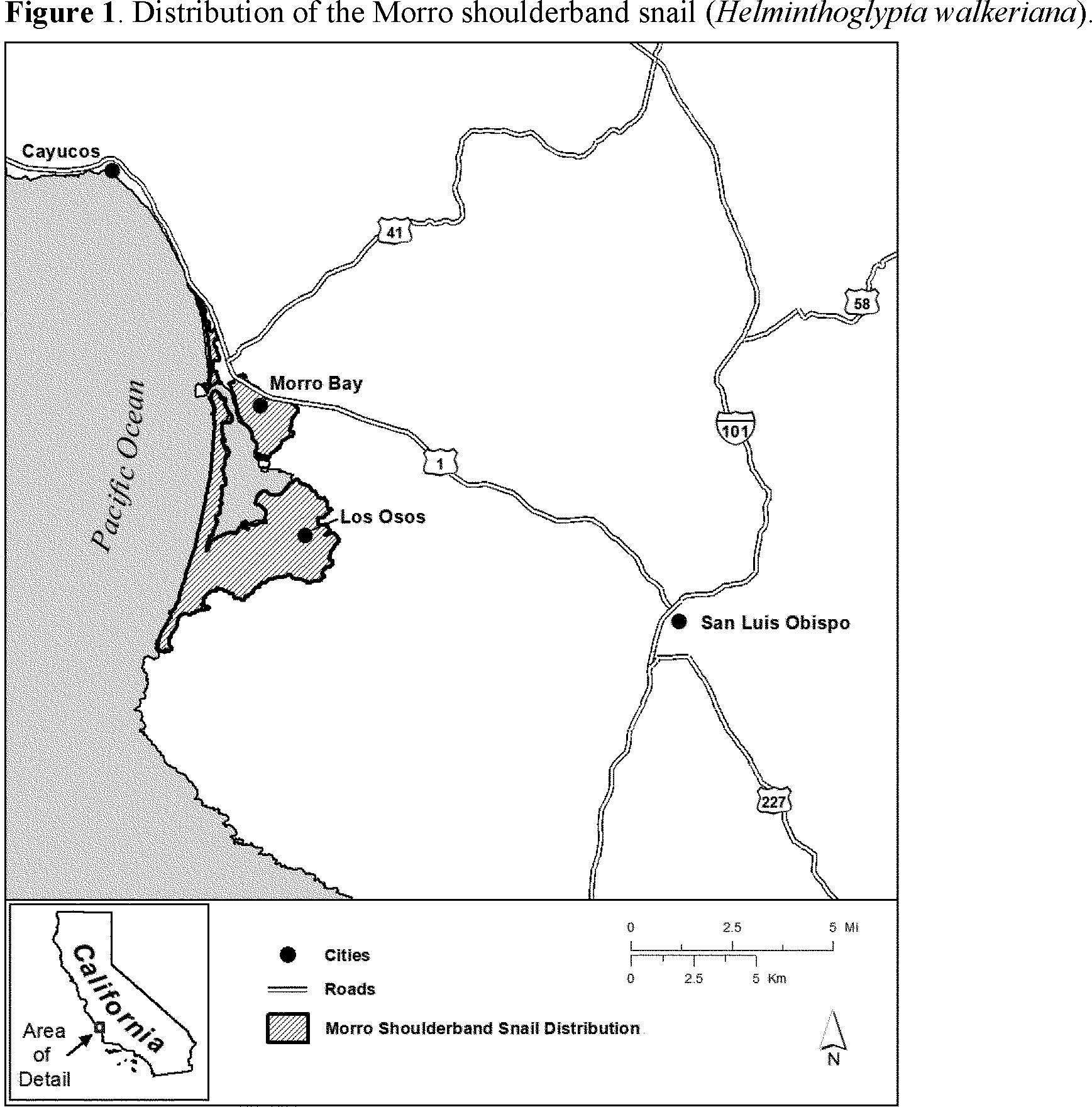 helminthoglypta walkeriana)