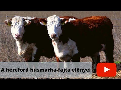 gyógyszerek szarvasmarhák férgekhez