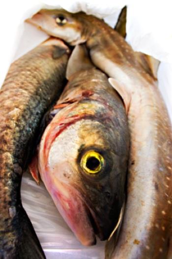 hal férgek hogyan lehet megszabadulni)