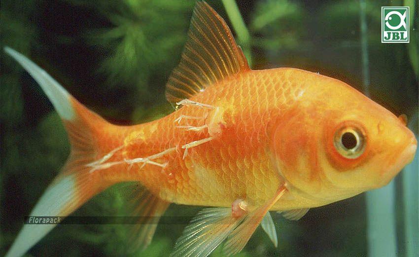 miért vannak halak férgek)