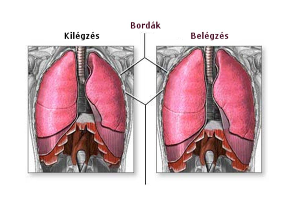 A légzés válaszokat okoz - A magas páratartalom rontja a COPD tüneteit