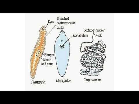 kenet a citológiai dekódoló normához