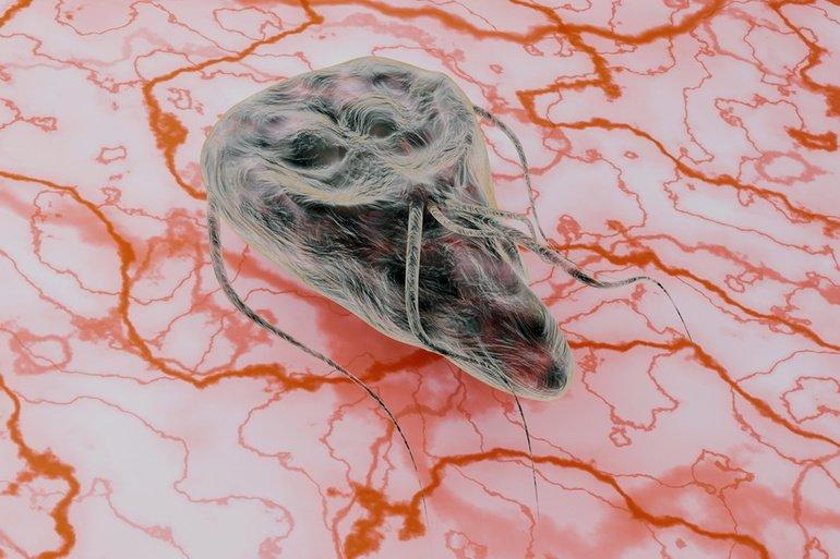 was ist giardien bei katzen parazita az emberi fül videoban