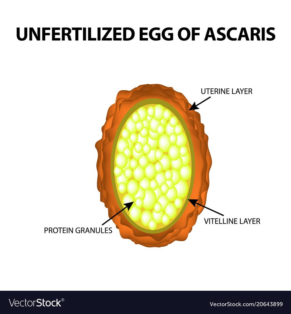 Ascaris prevenciós kezelés. Azonosítsa a parazitát a testben
