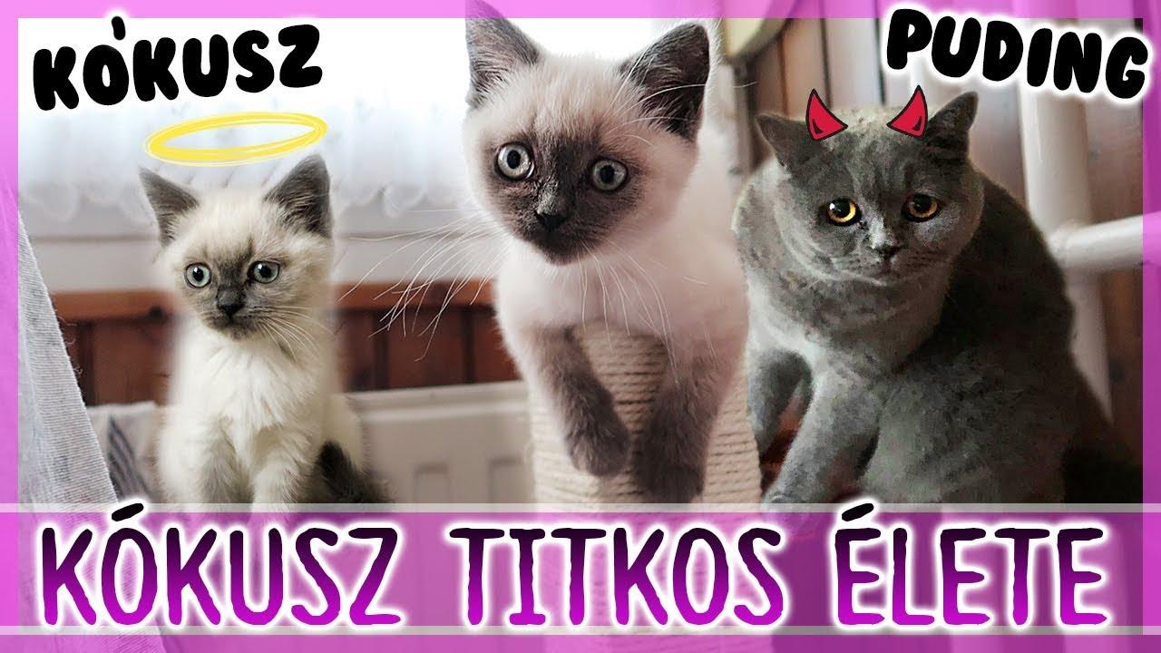 férgek cica kezelő gyógyszerekben)